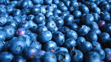 Photo of Natale in blu
